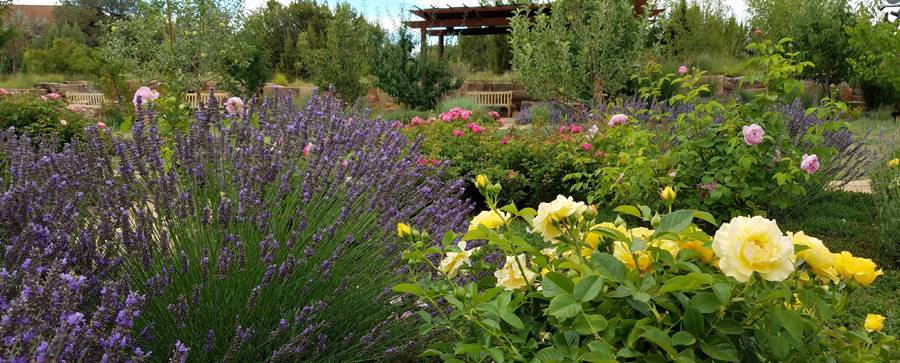 Find Your Oasis In The High Desert State Employees Credit Union